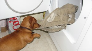 Dogs doing laundry