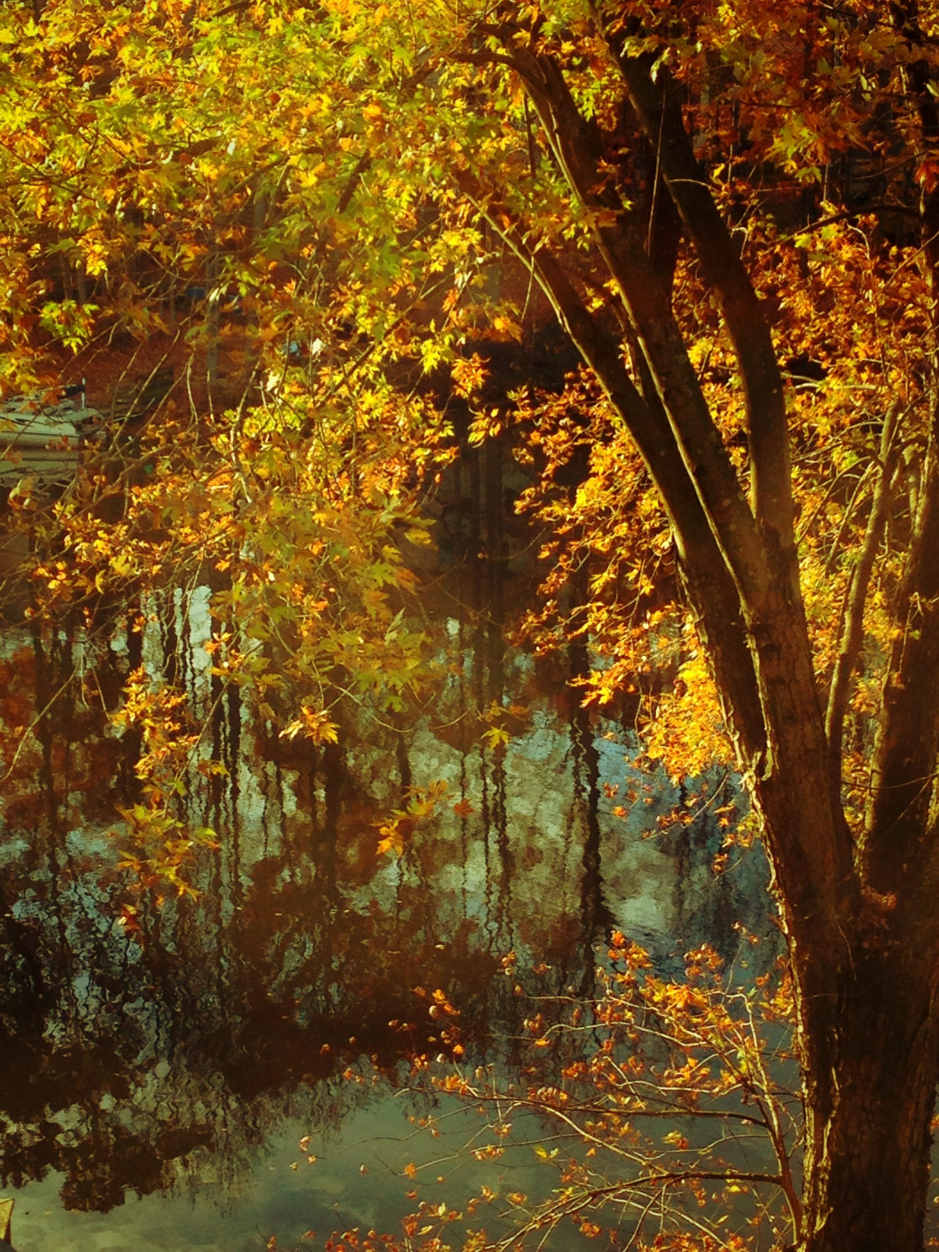 The Wonder of Autumn: Embracing God's Glory-Gift of Fall