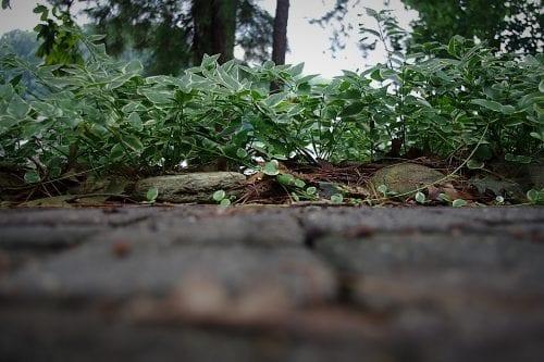 Meditation is like following a garden path