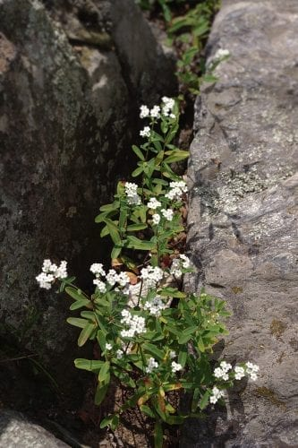 Flowers growing in the rocks